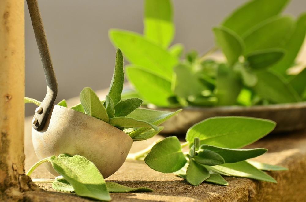 Трава бардакош для похудения учимся использовать майоран в рецептах для снижения веса