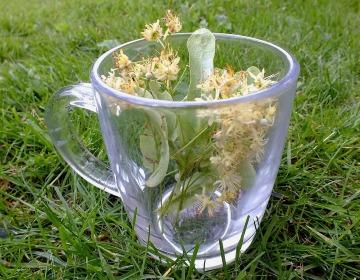 Омела белая для похудения эффективное растение.